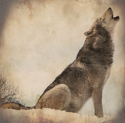 how to raise a wolf